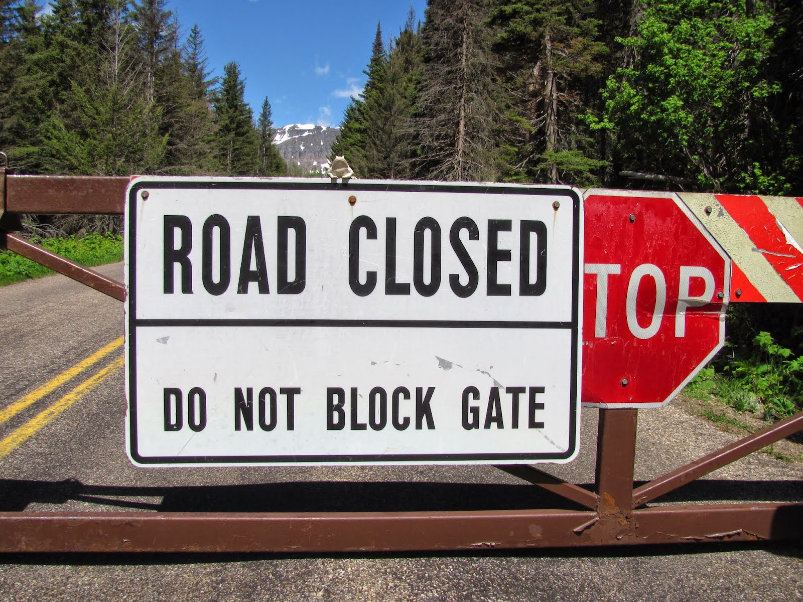 "Frog poses on the ""road closed"" sign where Going-to-the-Sun Road was closed by impassable snows in June at Glacier National Park in Montana"