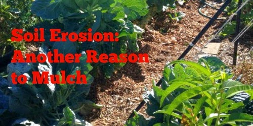 Mulch protects topsoil.