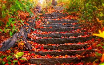 #2 Fall Leaves Wallpaper