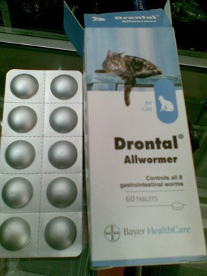 drontal bayer cat