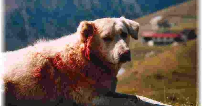 4 image un mot solution chien loup renard