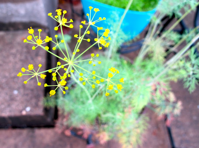 container dill