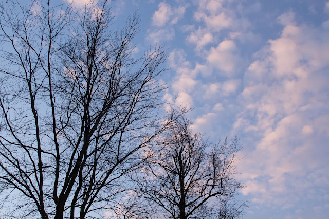 sky with bare trees