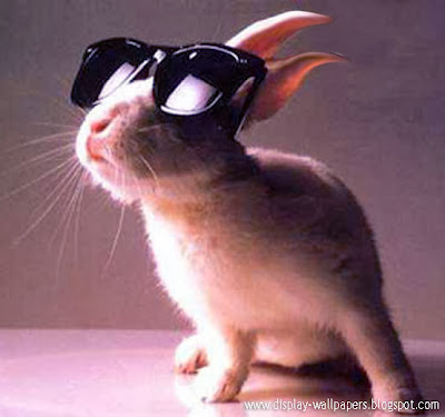 Funny Rabbit Pictures