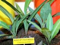 Kacip Fatimah, wanita