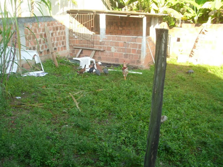 alegria do quintal