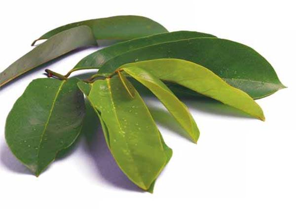 Manfaat daun sirsak untuk kanker : 10 lembar daun sirsak yangg tua ...