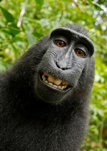 camwhore monkey