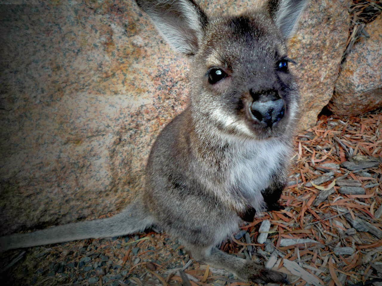 Funny animals of the week - 21 February 2014 (40 pics), baby wallaby picture