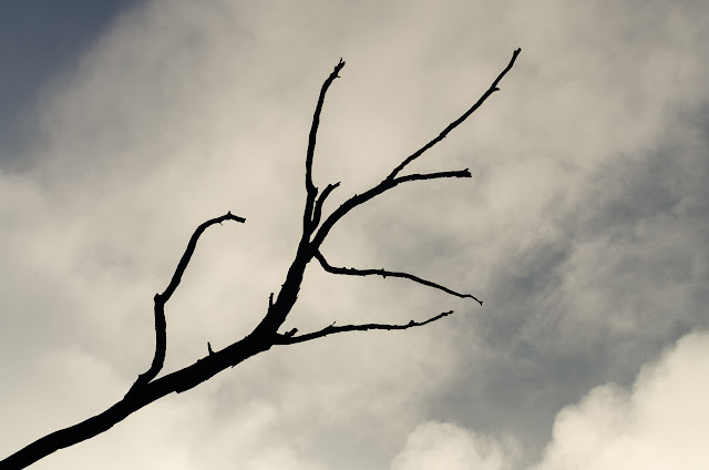 branch silhouetted against clouds