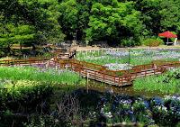 枚方山田池公園 Hirakata-Yamadaike Park