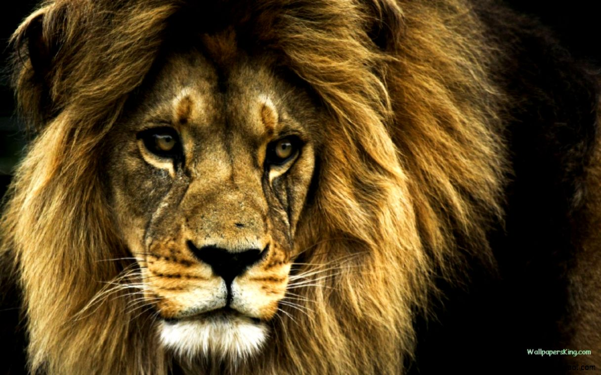 Beautiful Wild Animals Wallpapers   Top Images