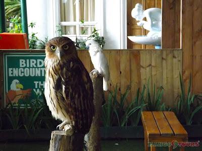 Mango Tours Residence Inn animals