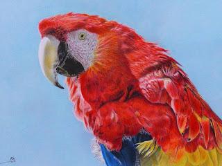 paisajes-naturales-con-coloridas-guacamayas