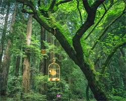 Juegos de Escape Escape from Dense Forest