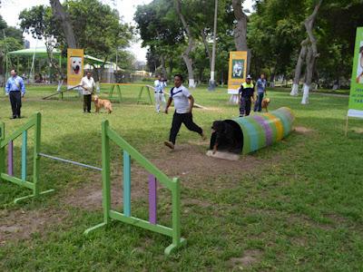 Se creara parque para perros