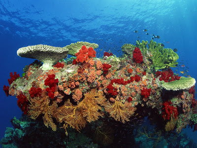 Amazing Coral Reef