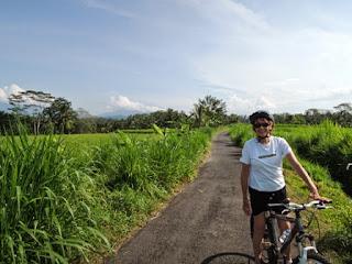 rice fields, volcano, Bali