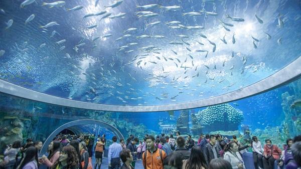 Kết quả hình ảnh cho hình ảnh viện hải dương học nha trang