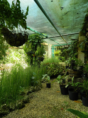 Screened display area at Orchid World Barbados by garden muses-not another Toronto gardening blog