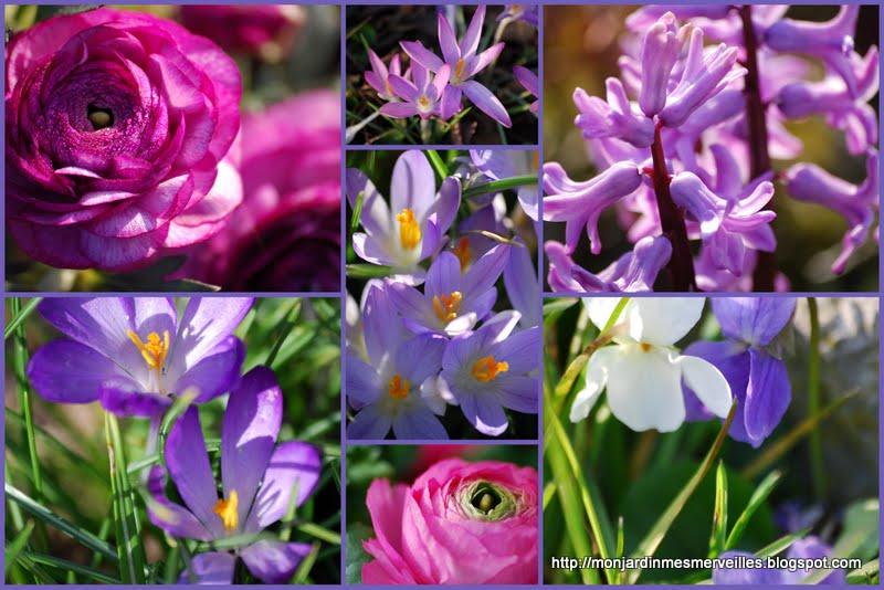 mon jardin mes merveilles: zoom arrière sur 2012 : mars
