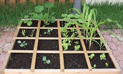 Kivi evde nasıl yetiştirilir Tohumların üremesi
