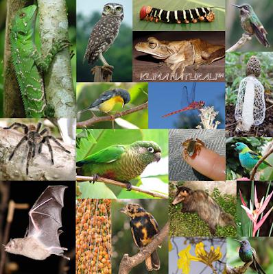 Biodiversidade Global