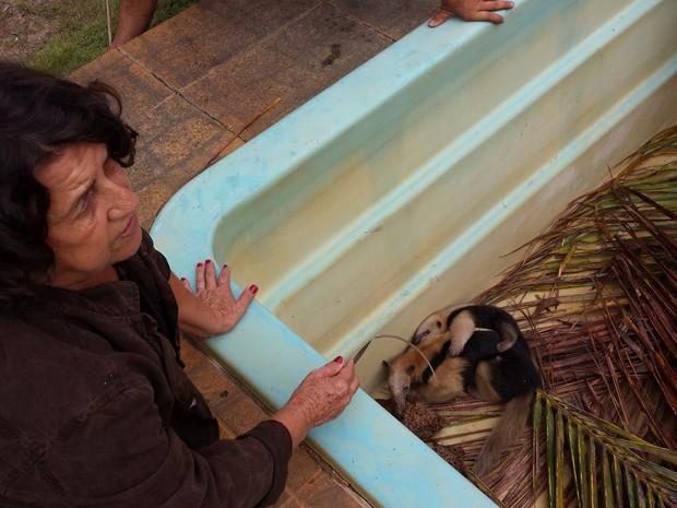 Dona Noêmia e Tamanduás em São João da Barra (Foto: Priscilla Alves / G1 Norte Fluminense)
