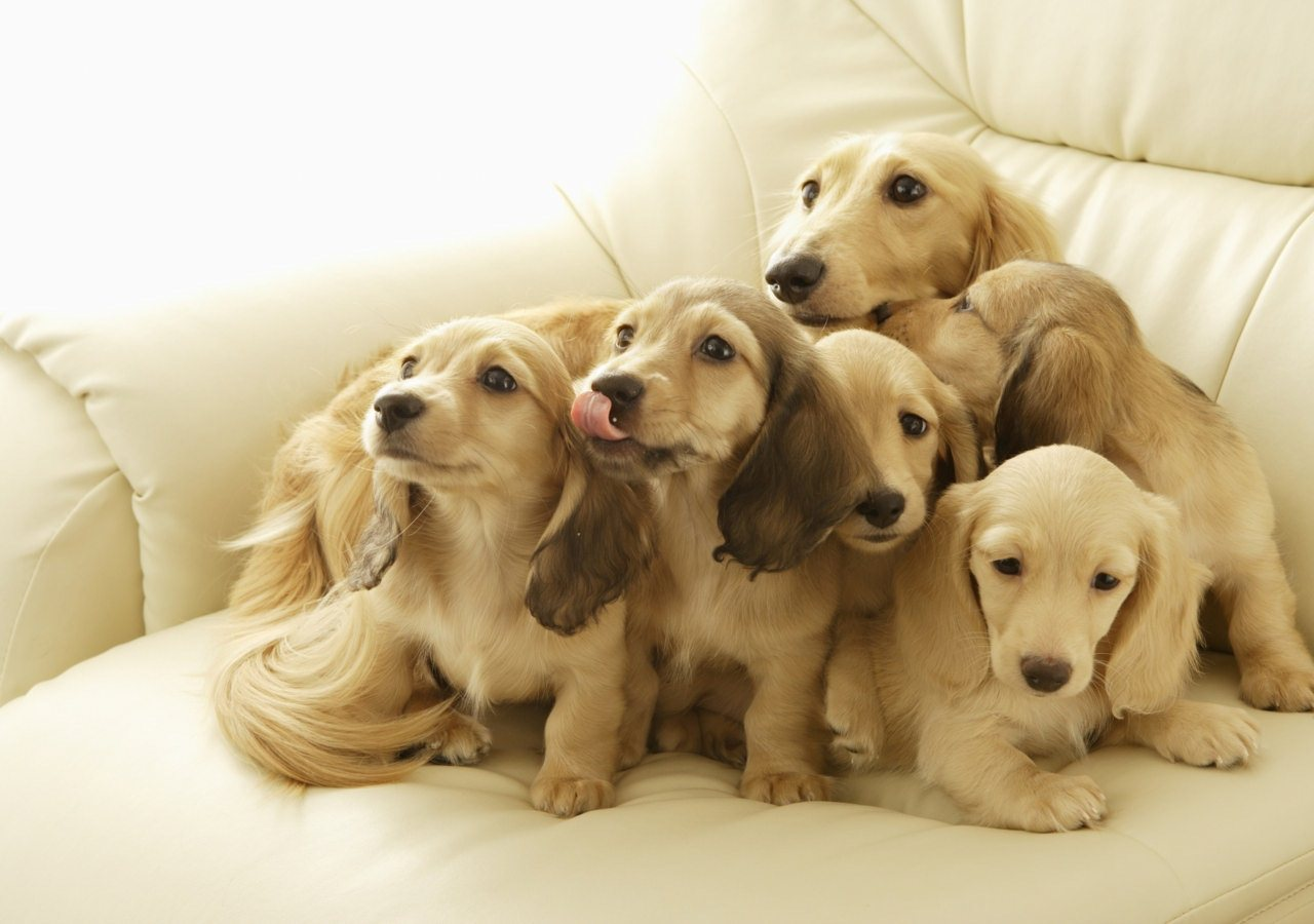 QQ Wallpapers: Cute Dogs HD Wallpapers Set 1