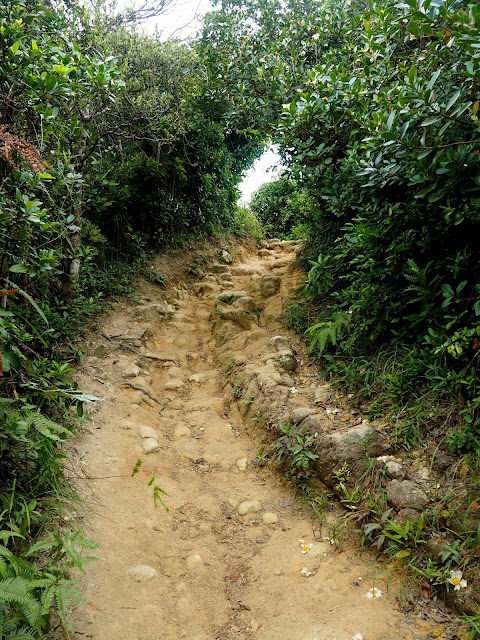 Rocky path on Dragon's Back Trail, Hong Kong Island