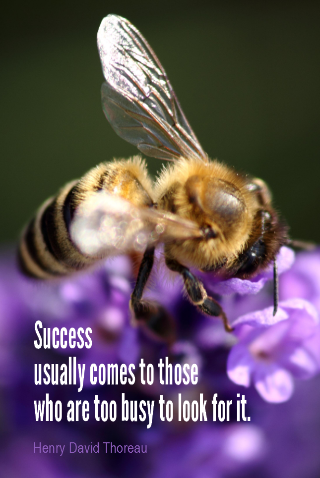 visual quote - image quotation for SUCCESS - Success usually comes to those who are too busy to be looking for it. - Henry David Thoreau