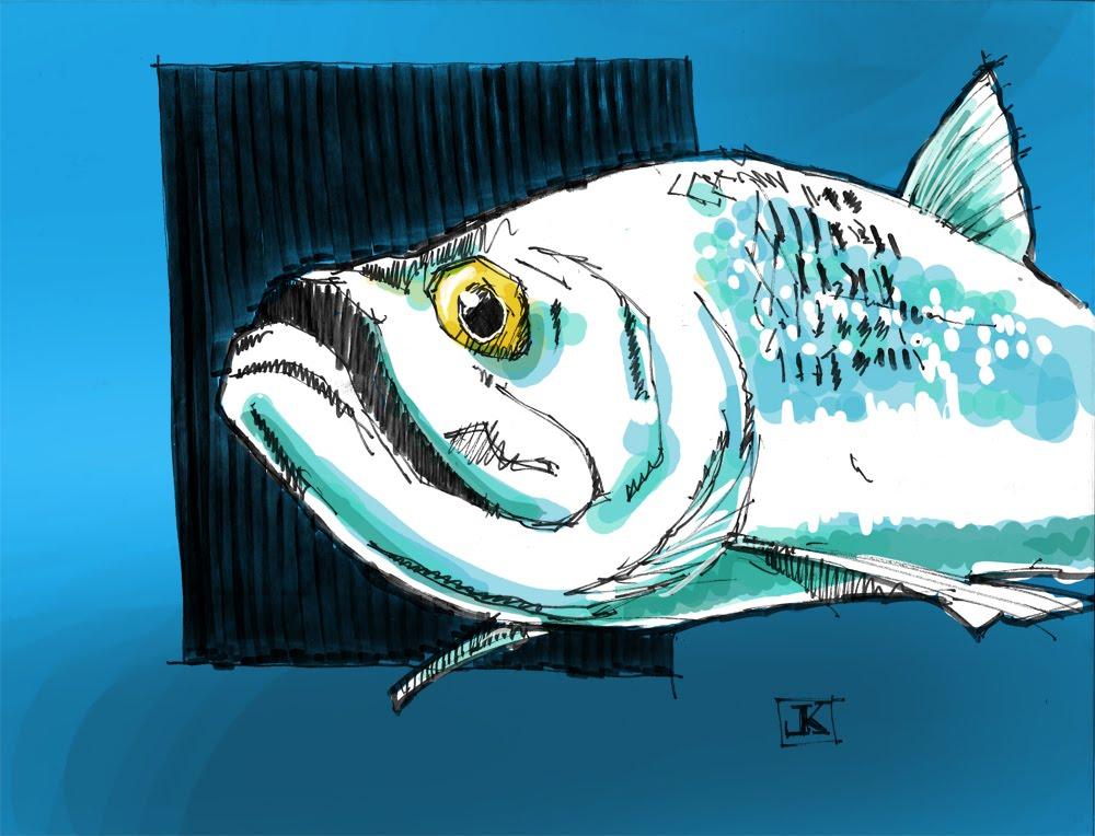 Drawing flies 365 drawing fish 52 7 tarpon for Tarpon fish pictures