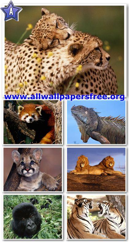 100 Amazing Animals Wallpapers 1600 X 1200 [Set 21]