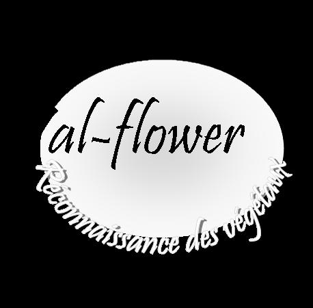 val - flower