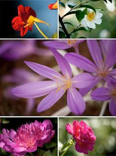 Высококачественное фото цветов большого разрешения