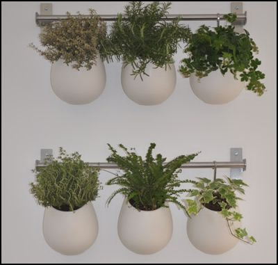 Zelles f minin home made un mur v g tal dans votre for Plante aromatique cuisine