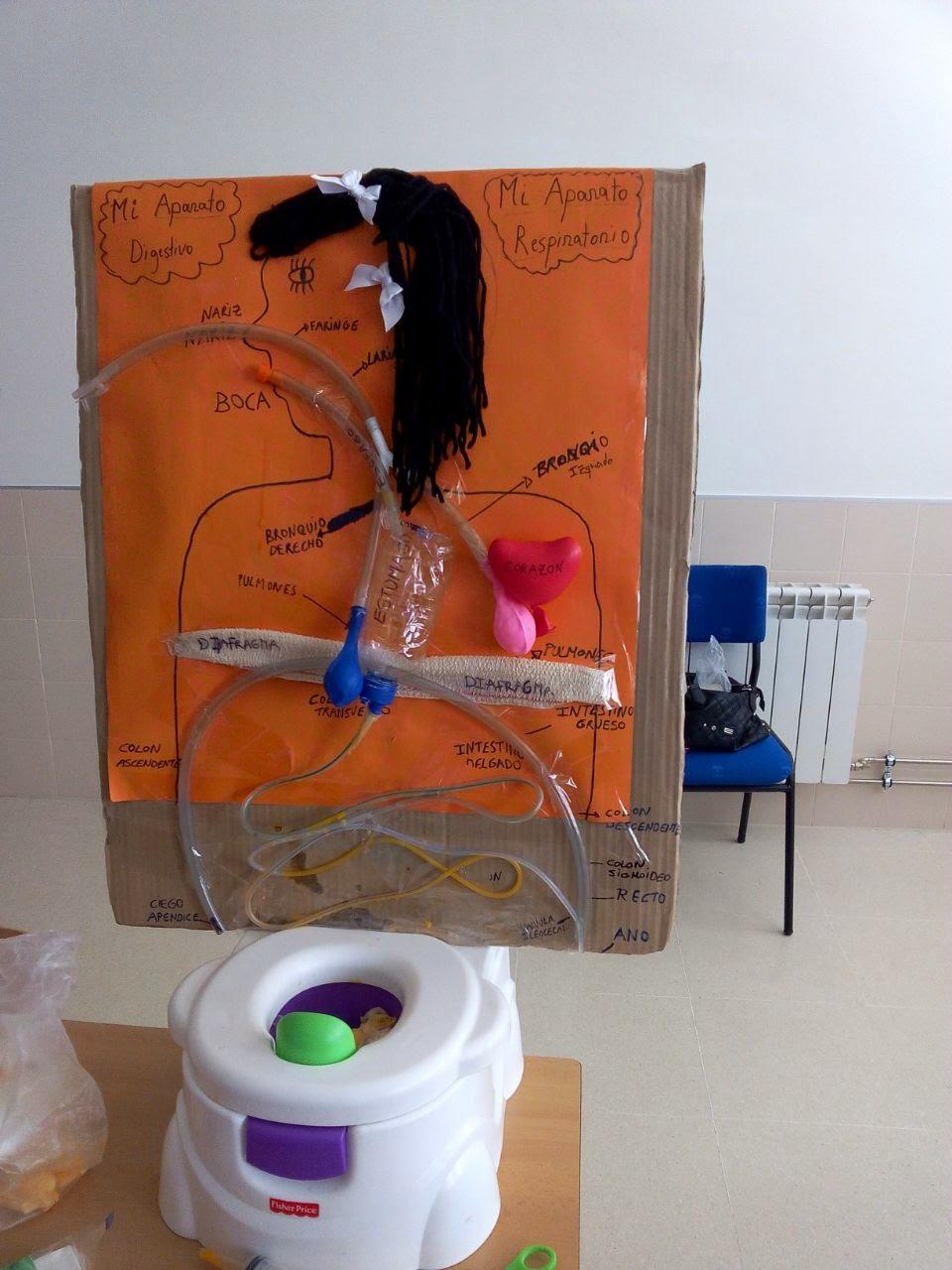 Sistema Digestivo Hecho En Material Reciclable   MEJOR CONJUNTO DE