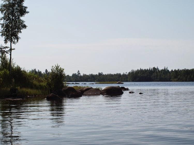 Sommer ved svensk skovsø