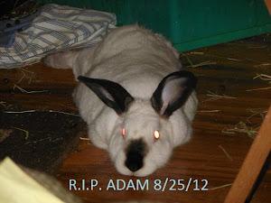 My Bunny Boy