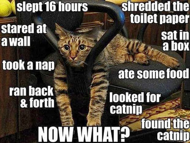 30 Funny animal captions - part 18 (30 pics), funny cat meme
