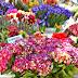 L'arrivée de notre fleuriste à Beaucamps-Ligny