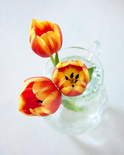 yellow orange red tulips textured