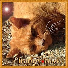Buddy  RIP