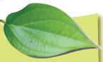 Bagian Tumbuhan Dan Fungsinya daun