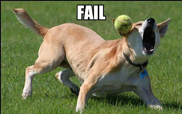 fail. Labels: dog, fail, sveyo