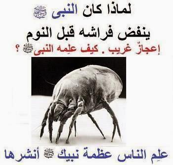 لماذا كان النبي صلى الله عليه وسلم ينفض فراشه قبل النوم؟