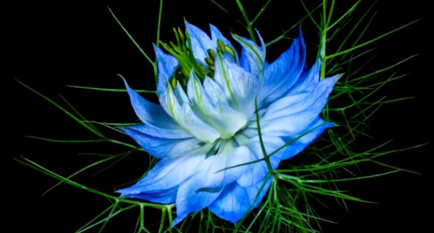 La meraviglia dei fiori in un video timelapse