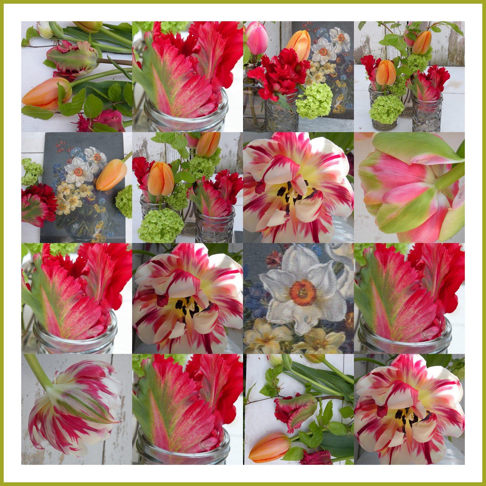 Tulpen Time