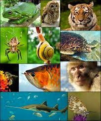 Cours Biologie des organismes Animaux svt s2