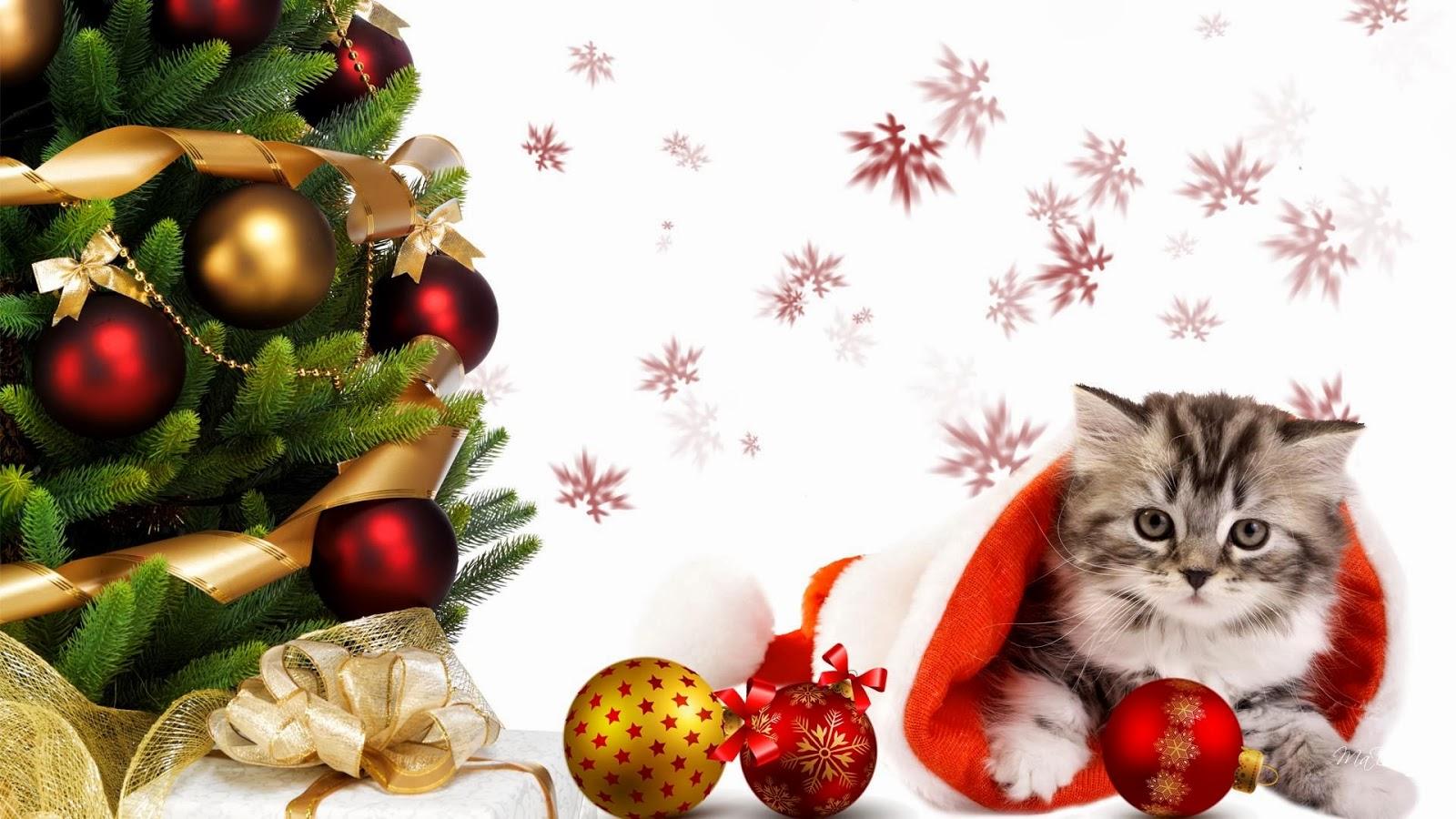 Banco de im genes 28 im genes navide as realmente - Las mejores felicitaciones navidenas ...